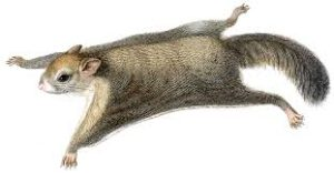 The environment flying squirrel